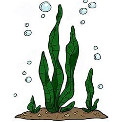 Обертывания на основе водорослей