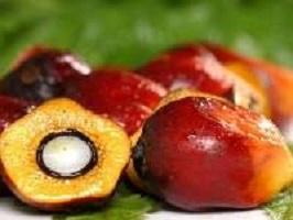 Пальмовое масло: вред и польза для нашего организма
